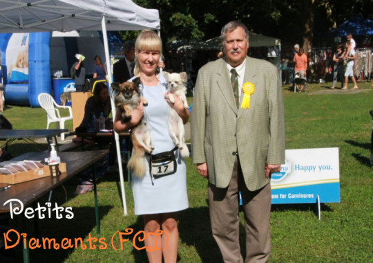 15-16.09.2018 International dog shows in Lendava (Slovenia)