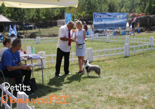 01-02.09.2018 Dog Shows in Grude and Posusje (Bosnia Herzegovina)